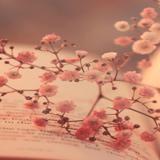 Libreto Redação e Texto